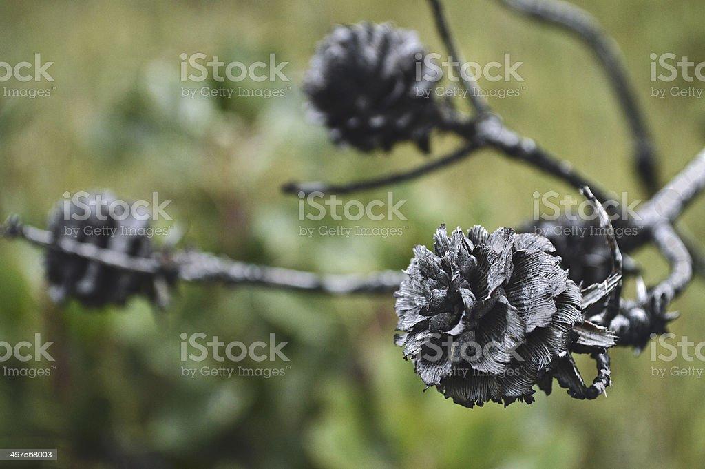 Burnt Flower stock photo