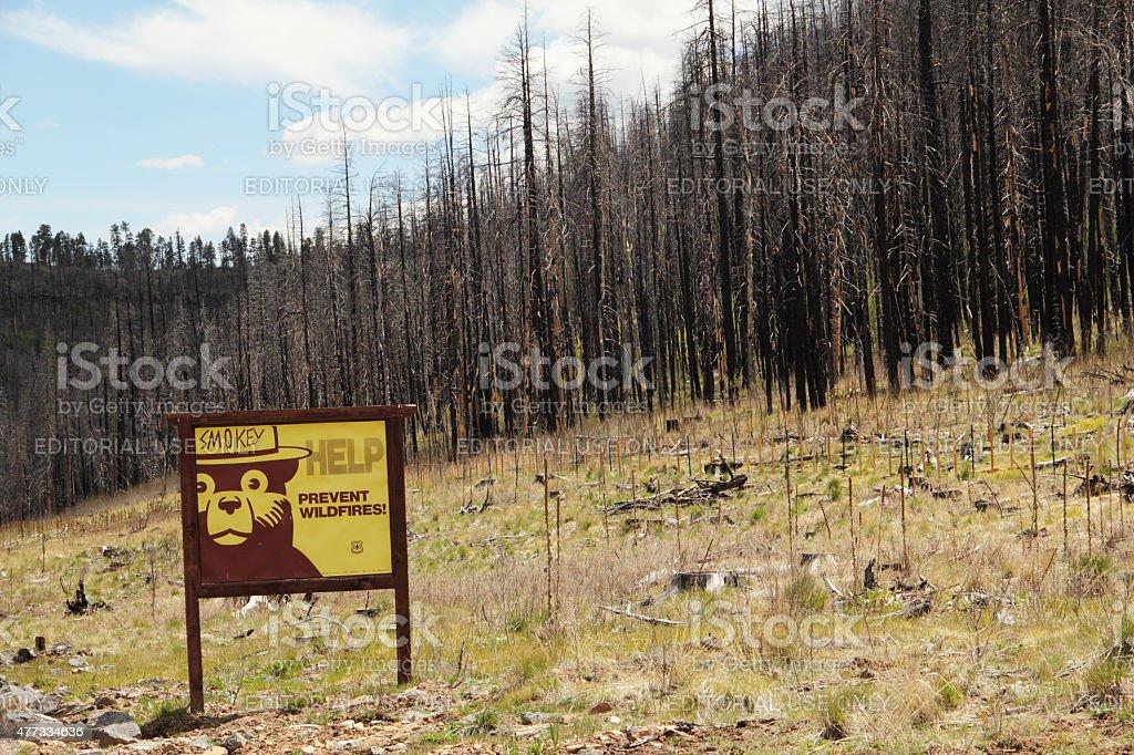 Burnt Forest Fire Smokey Bear Arizona stock photo