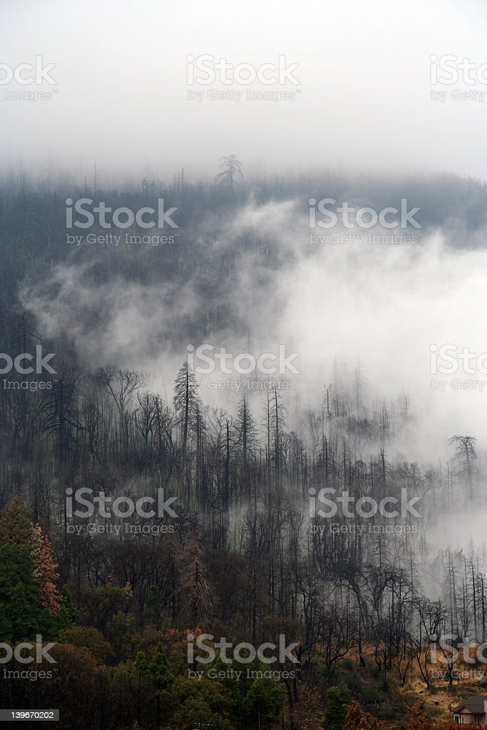 Burnt Pine Forest Clouds stock photo