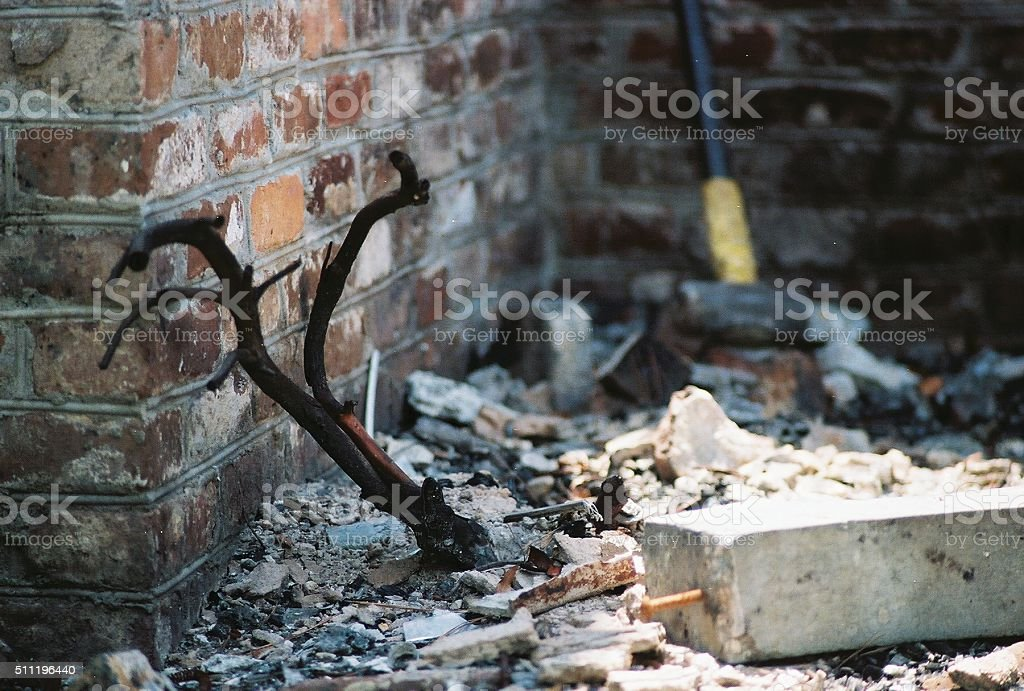 Burnt plant in the rubble of a home stock photo