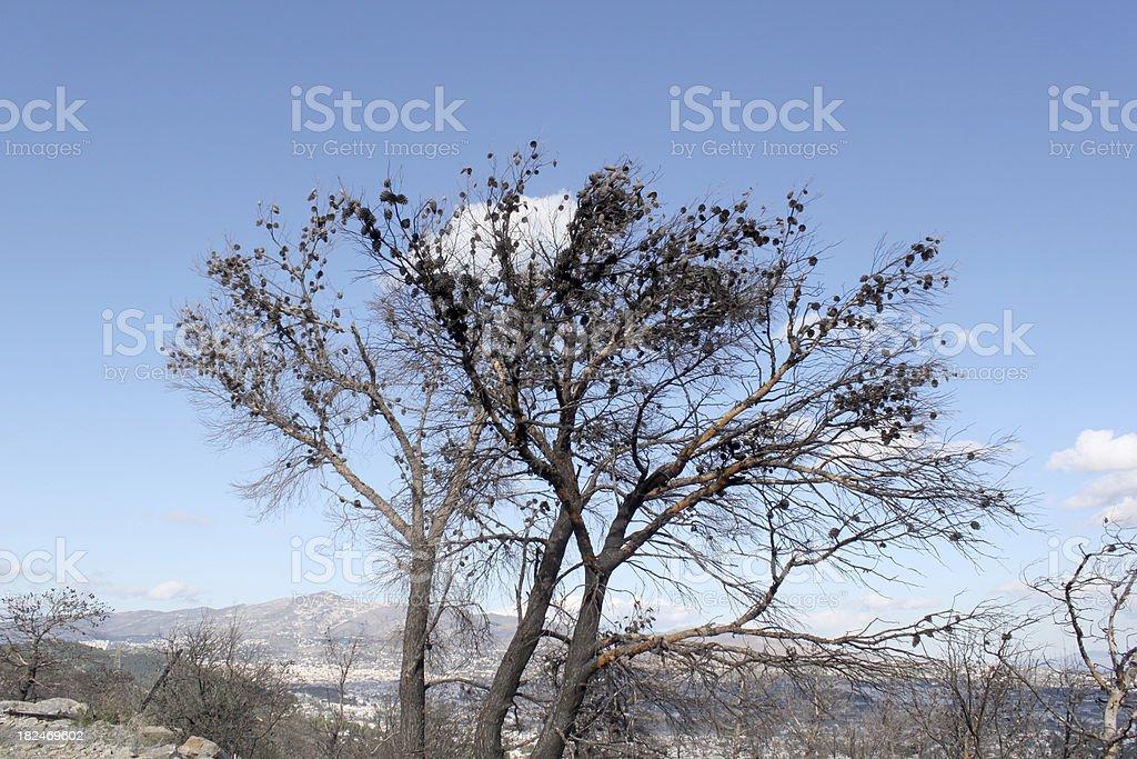 burnt tree stock photo