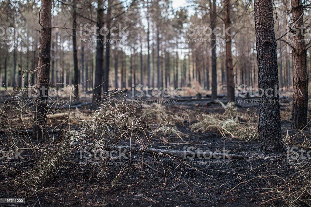 Burnt wood 5 stock photo