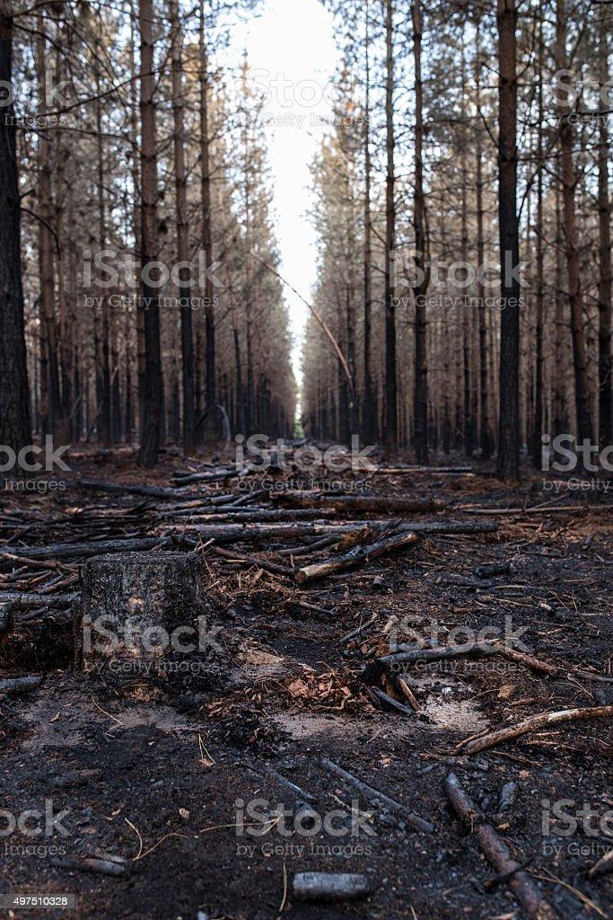 Burnt woods 2 stock photo
