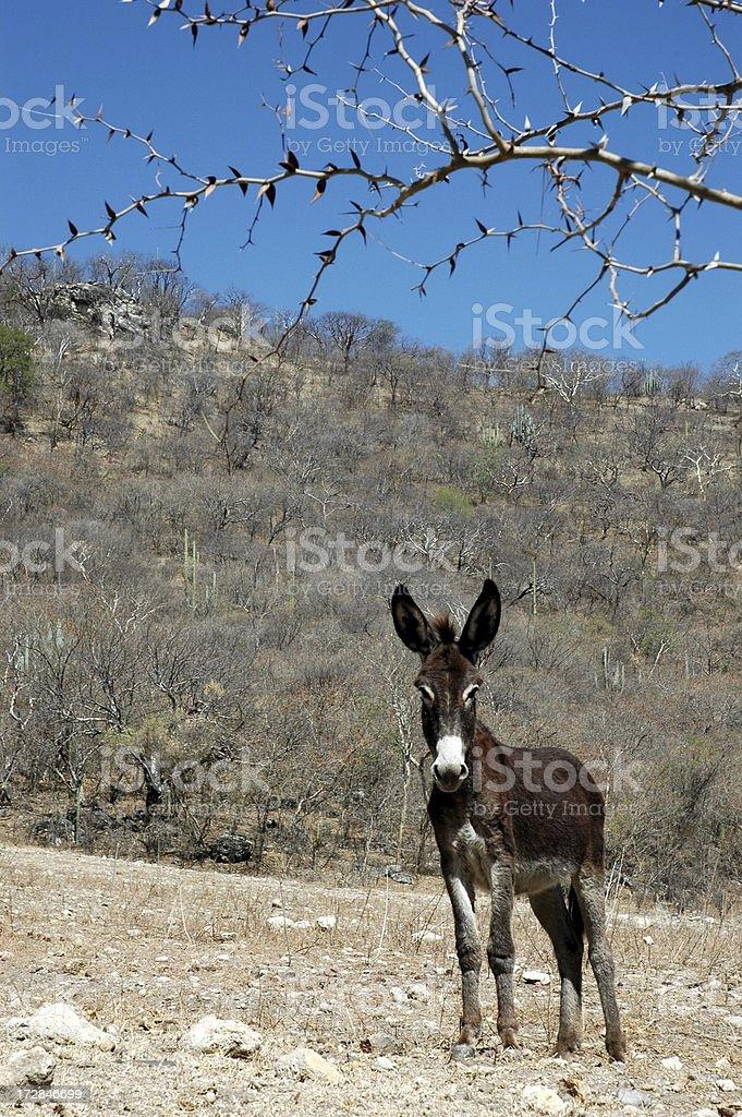 Серый в пустыне Стоковые фото Стоковая фотография