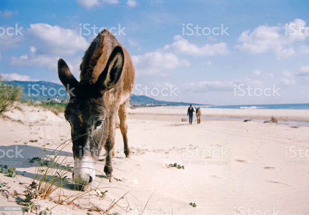 burro on the beach andalucia spain royalty-free stock photo