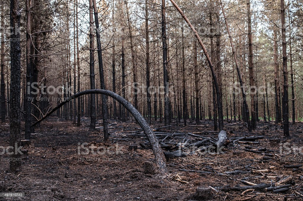 Burt woods 3 stock photo