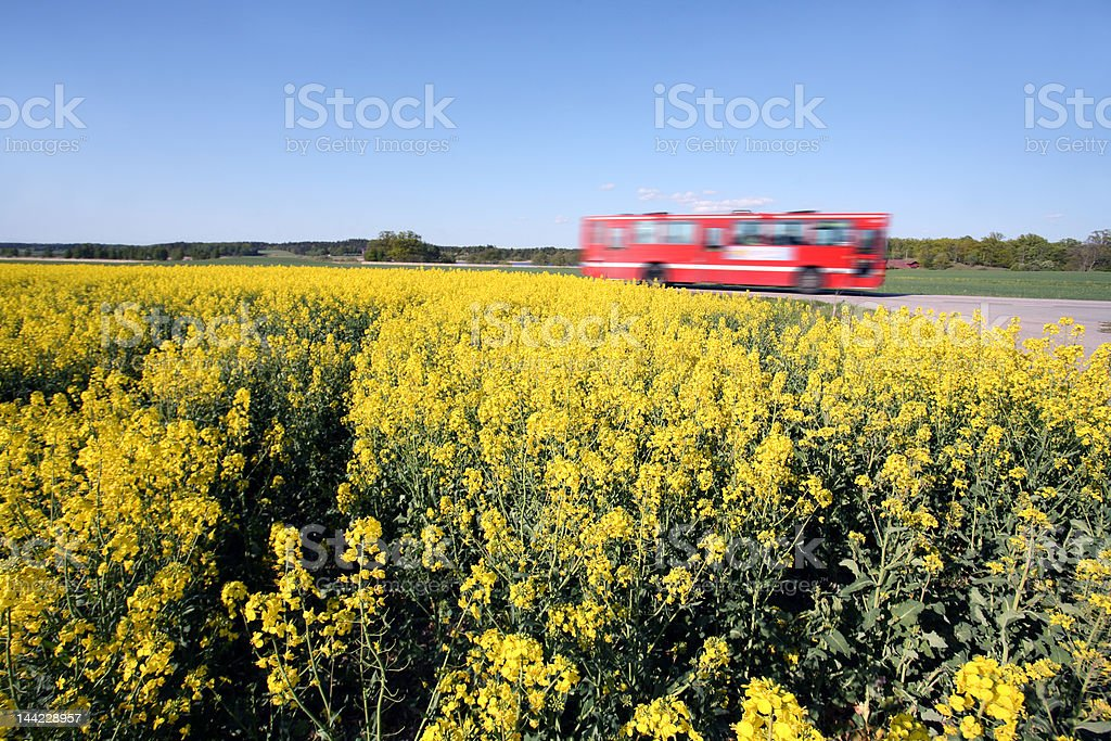 bus and Oilseed royalty-free stock photo
