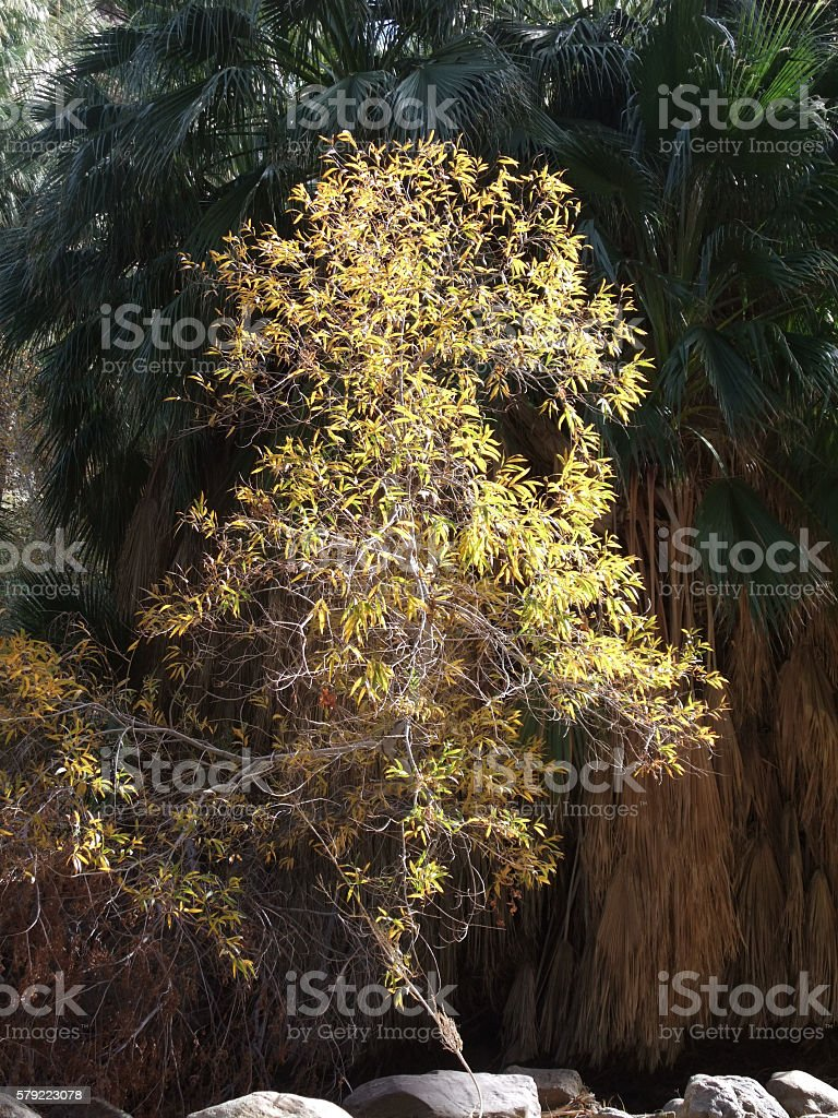 Bush and Palm Fronds stock photo
