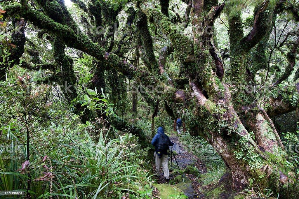 Bush At Mt Taranaki 3 stock photo