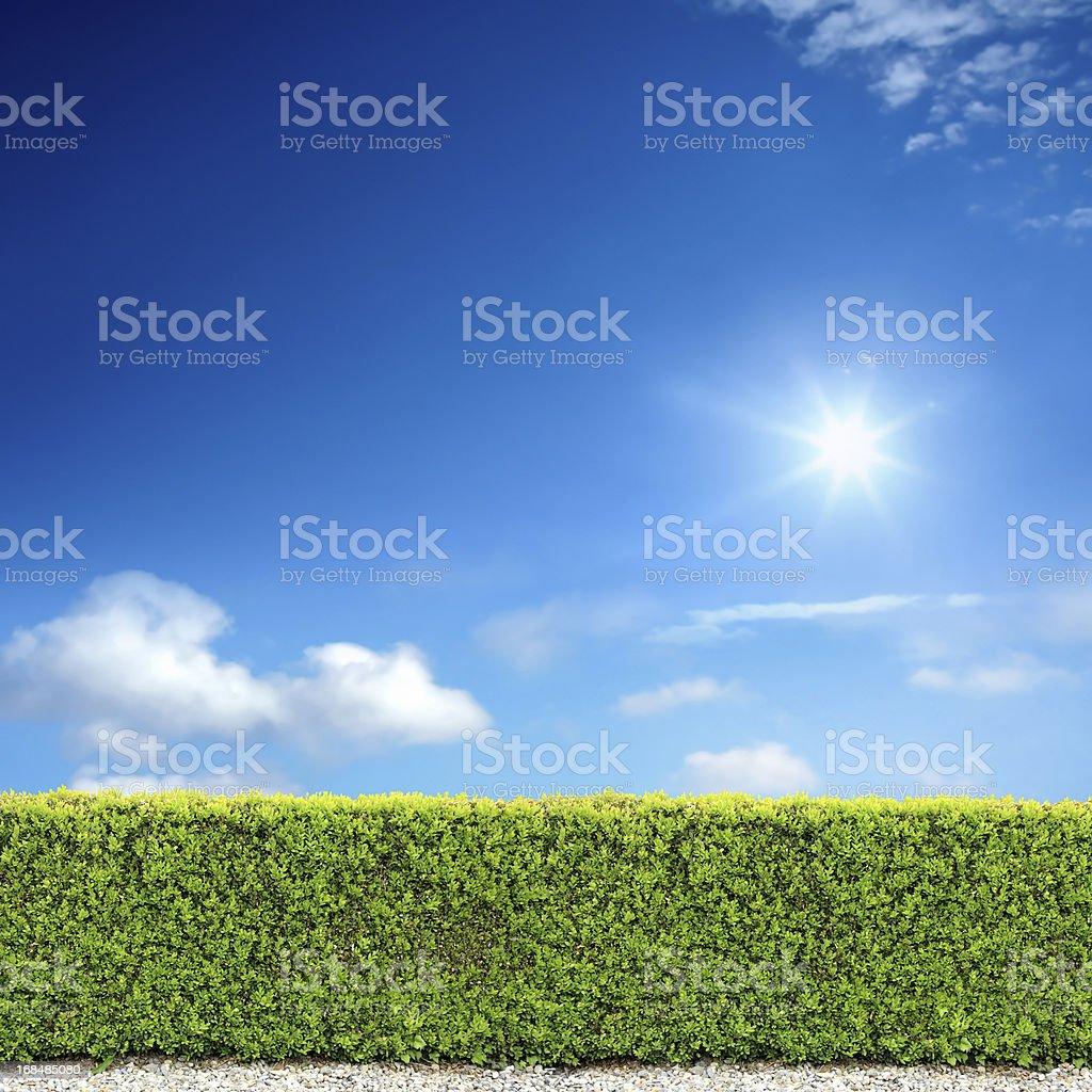 bush fence and sunny sky royalty-free stock photo