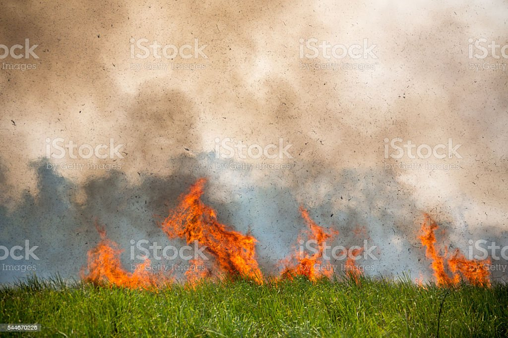 Bush fire in Kaziranga National Park India stock photo