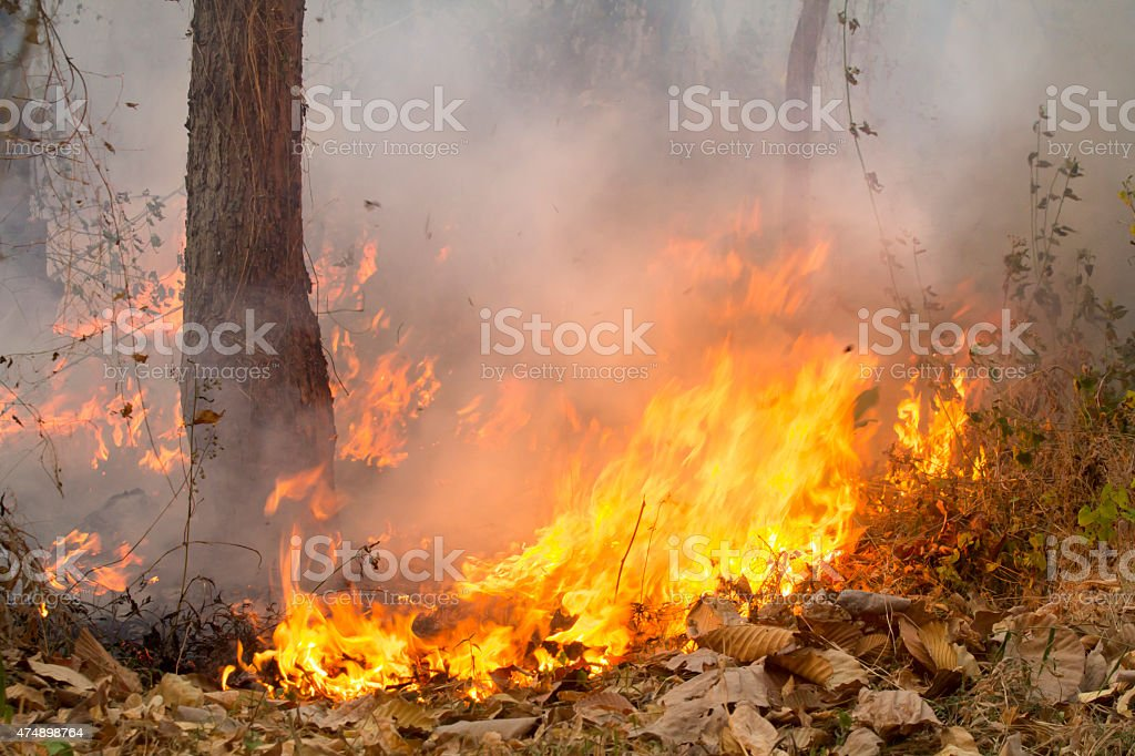bush fire in tropical forest stock photo