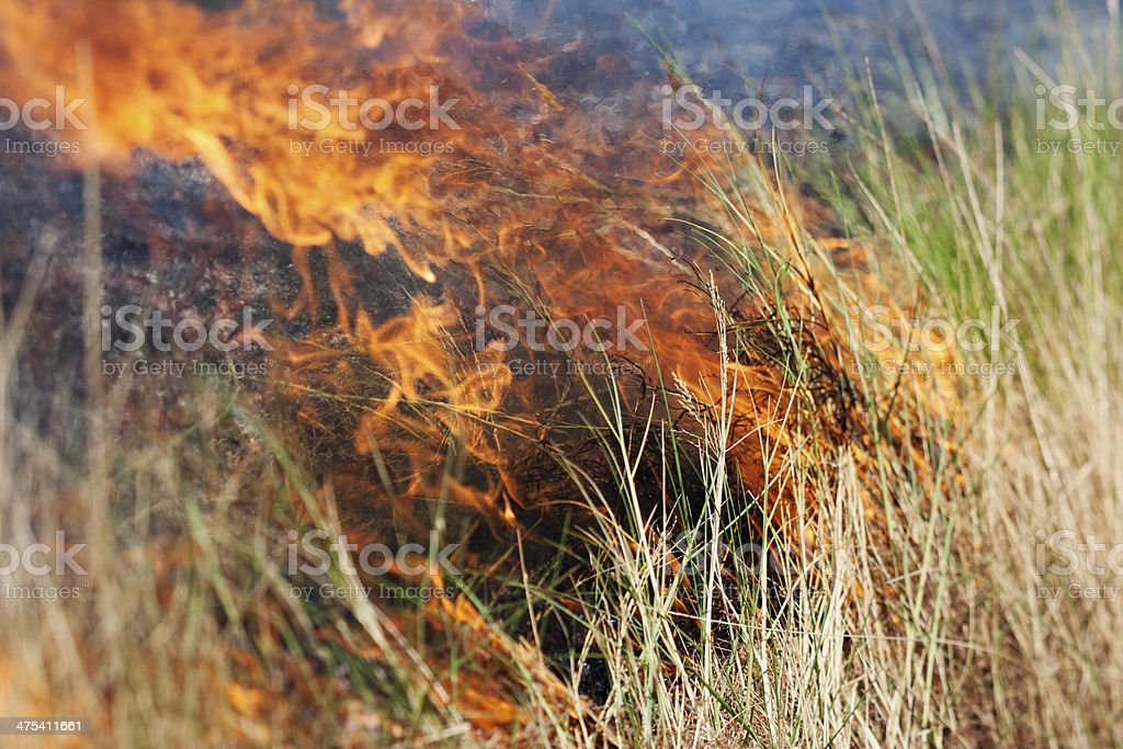 Bush Fire stock photo