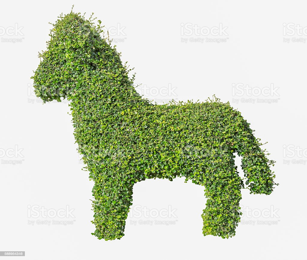Bush isolated on white background, Objects with Clipping Paths stock photo