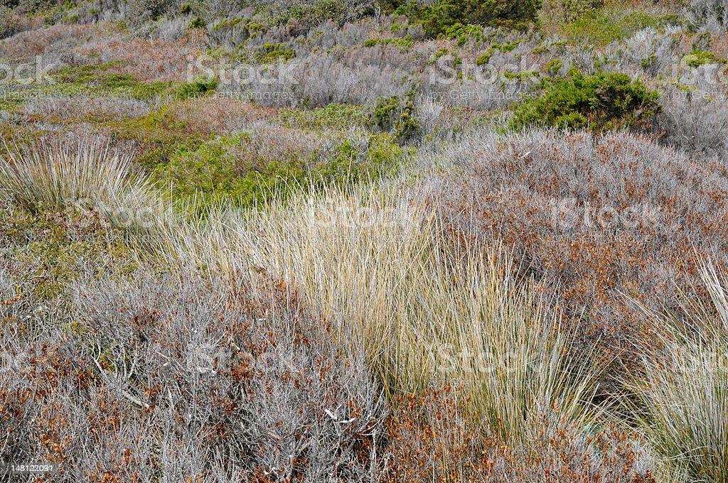 Bush land royalty-free stock photo