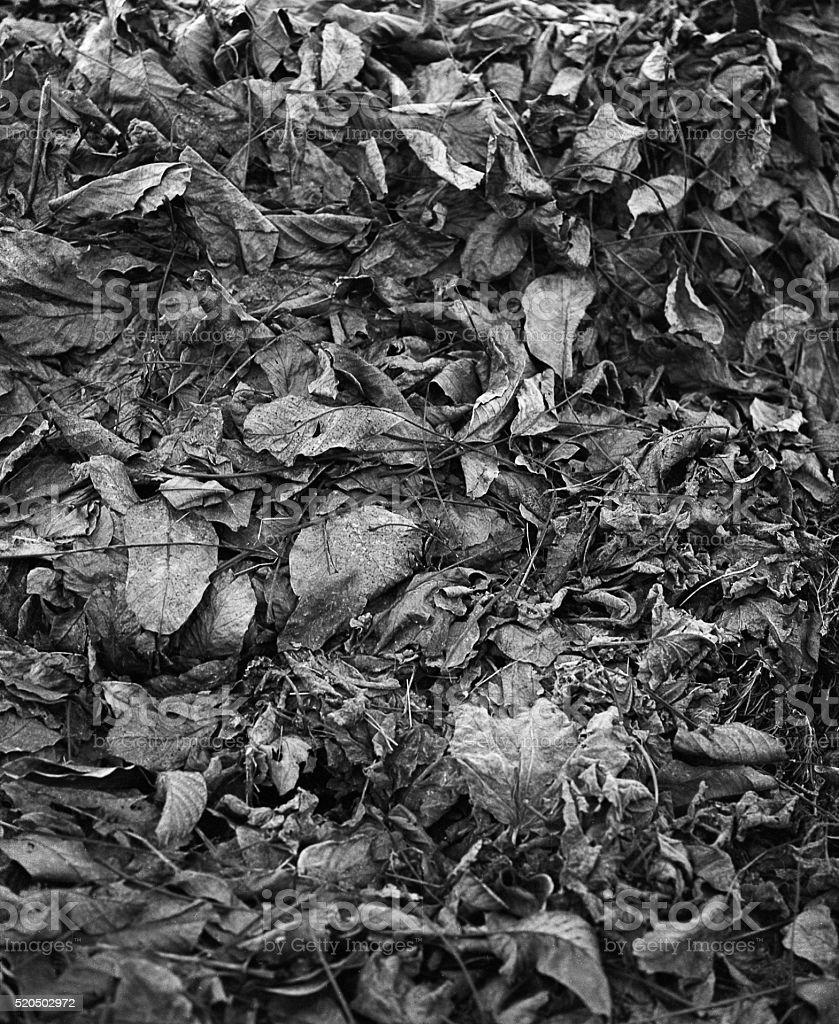 Bush leaves on the floor stock photo