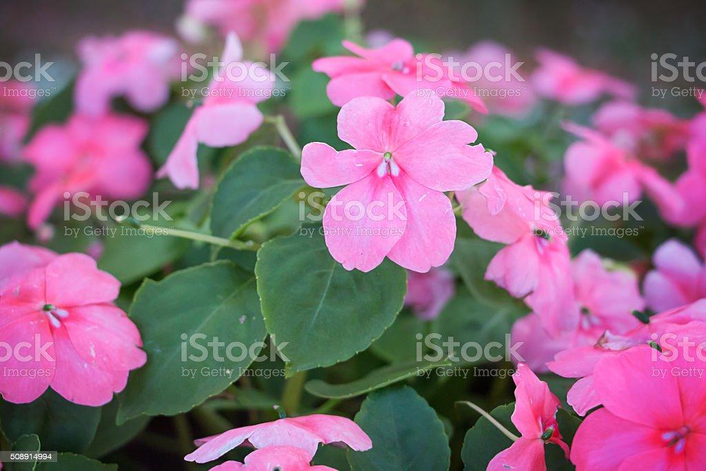 Bush pink flowers stock photo