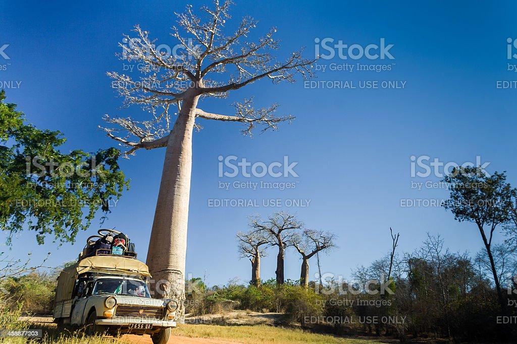Bush taxi and baobab royalty-free stock photo
