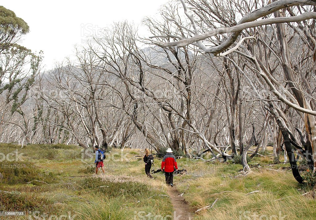 Bush Walking on Mount Kosciusko stock photo