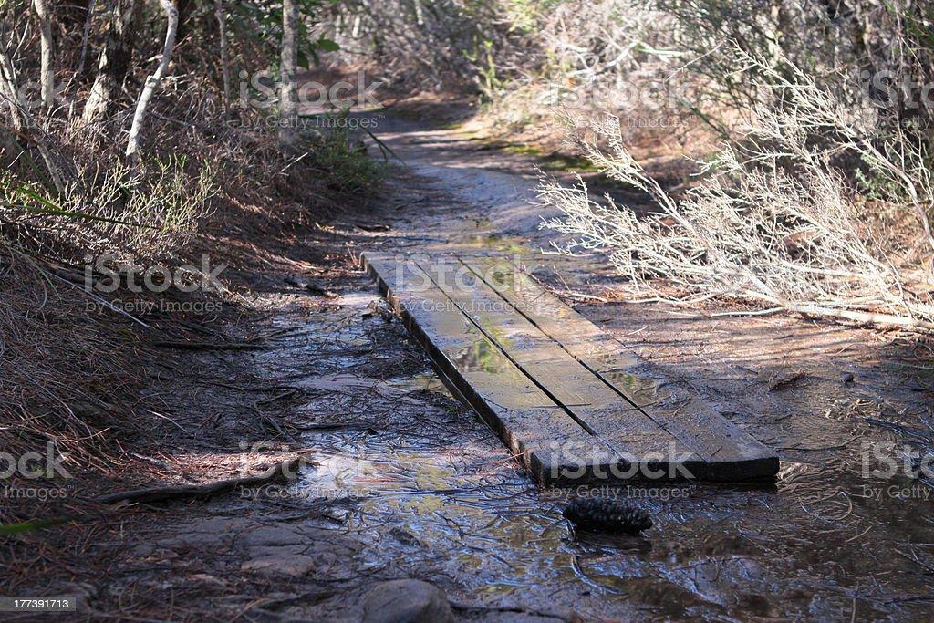Bush Walking on muddy tracks stock photo