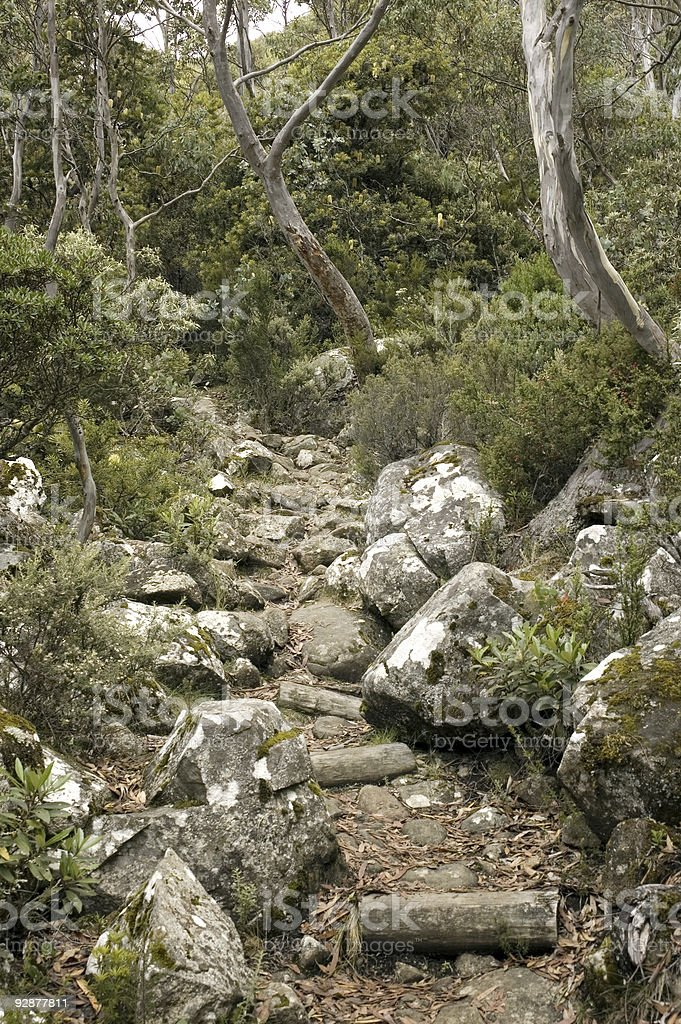 Bush Walking Track, Tasmania stock photo