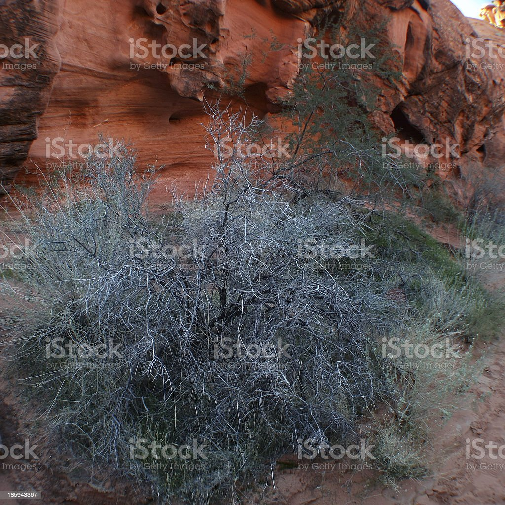 Bush with red rocks in a Canyon stock photo