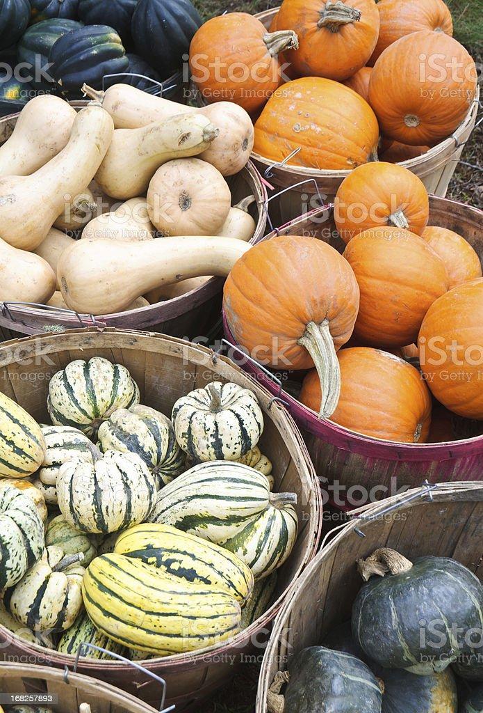 Bushel Baskets of Fall Squash royalty-free stock photo