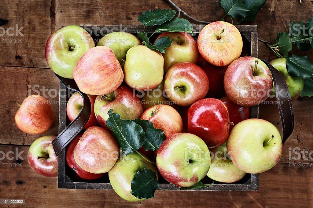 Bushel of Apples stock photo