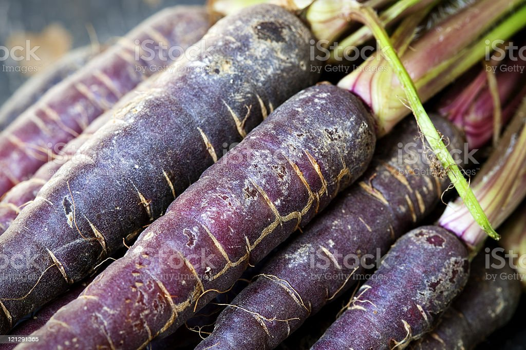 A bushel of purple carrots fresh from the ground stock photo