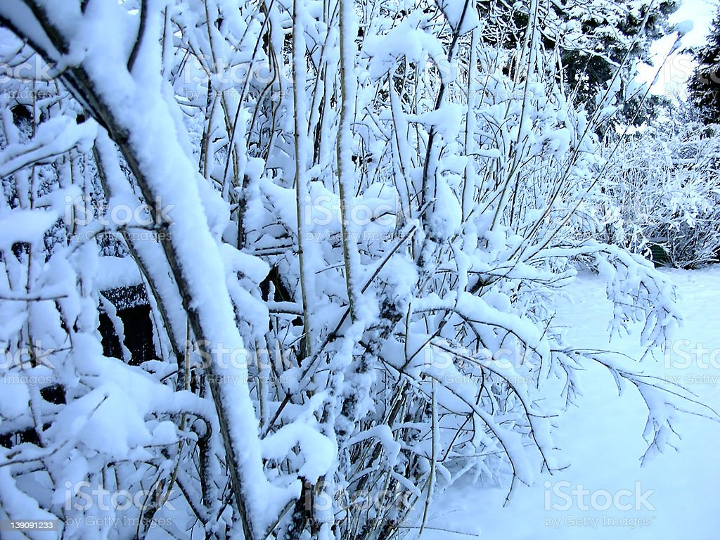 Bushes in Snow royalty-free stock photo