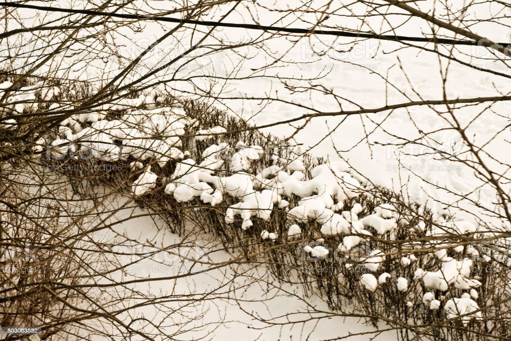 Bushes in winter view from above stock photo