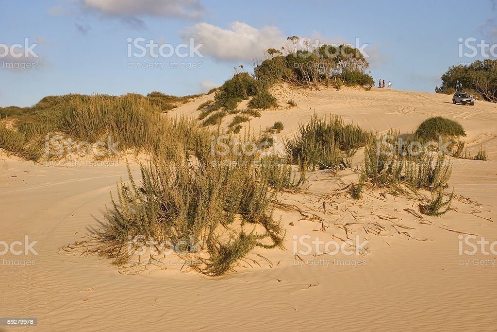 Bushes on sand royalty-free stock photo