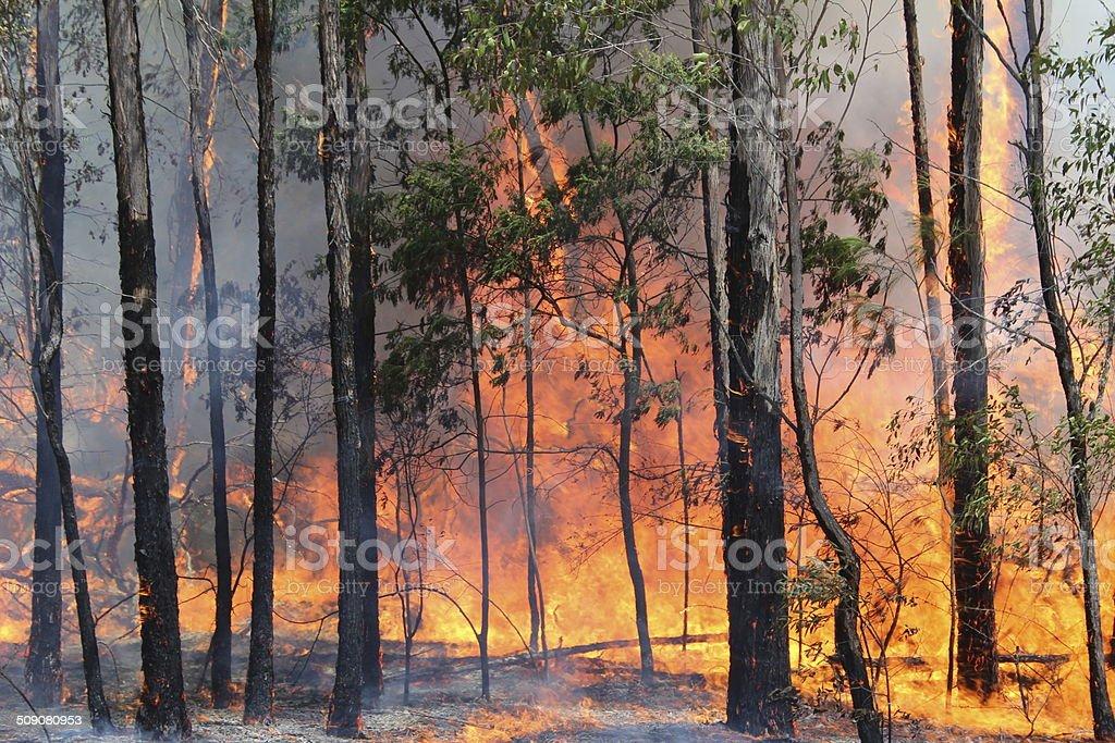 Bushfire Australia stock photo
