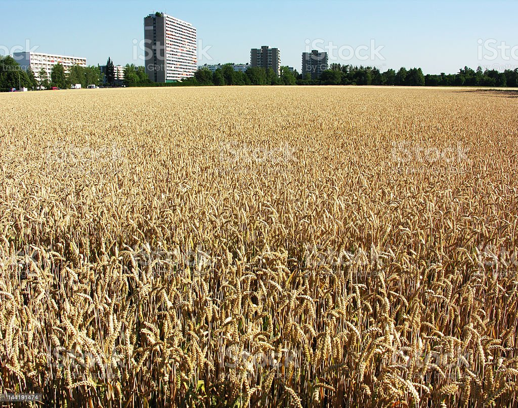 business and golden (green) fields stock photo