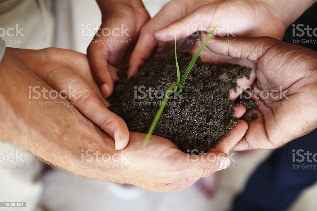 Business associates holding a young plant together stock photo