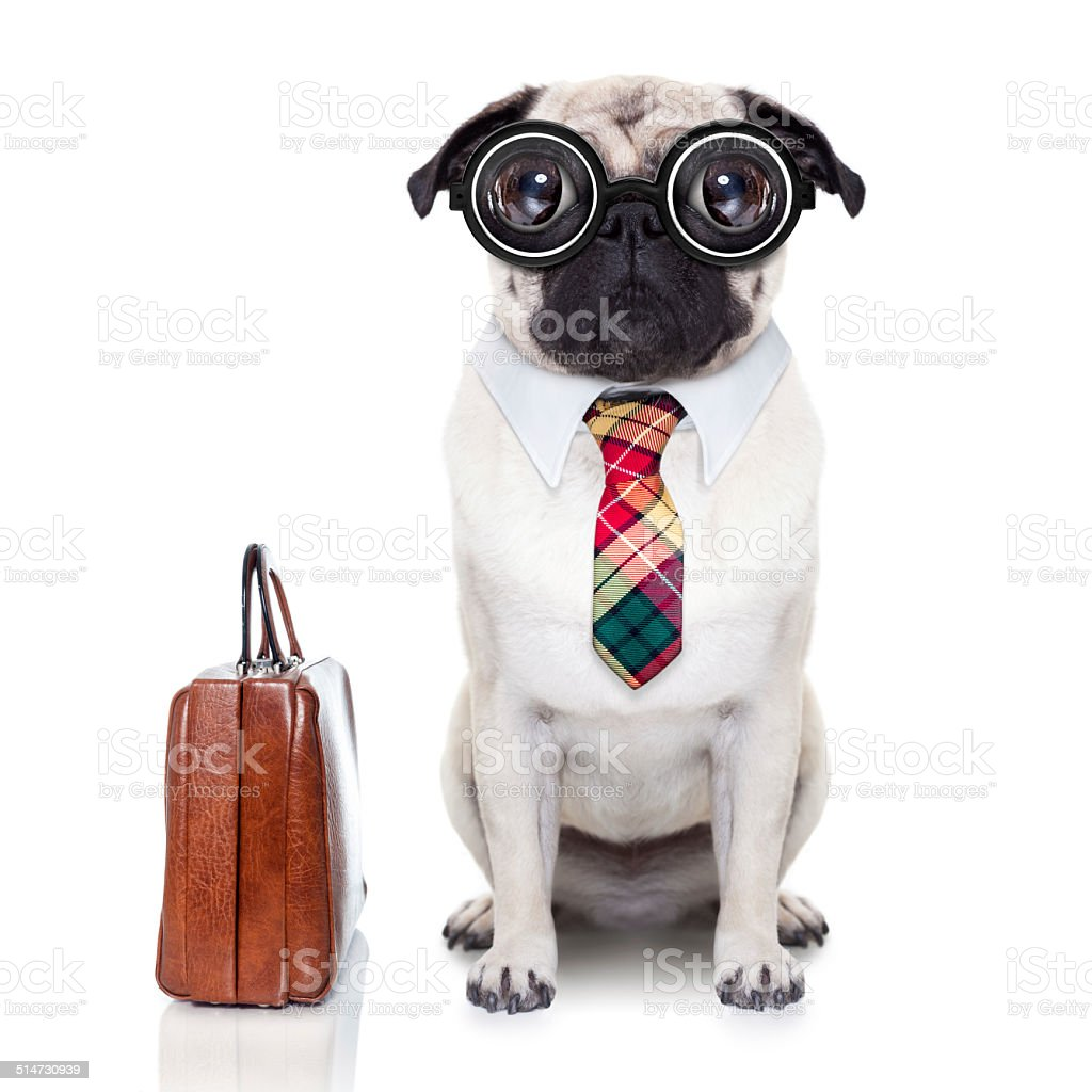 business boss dog stock photo