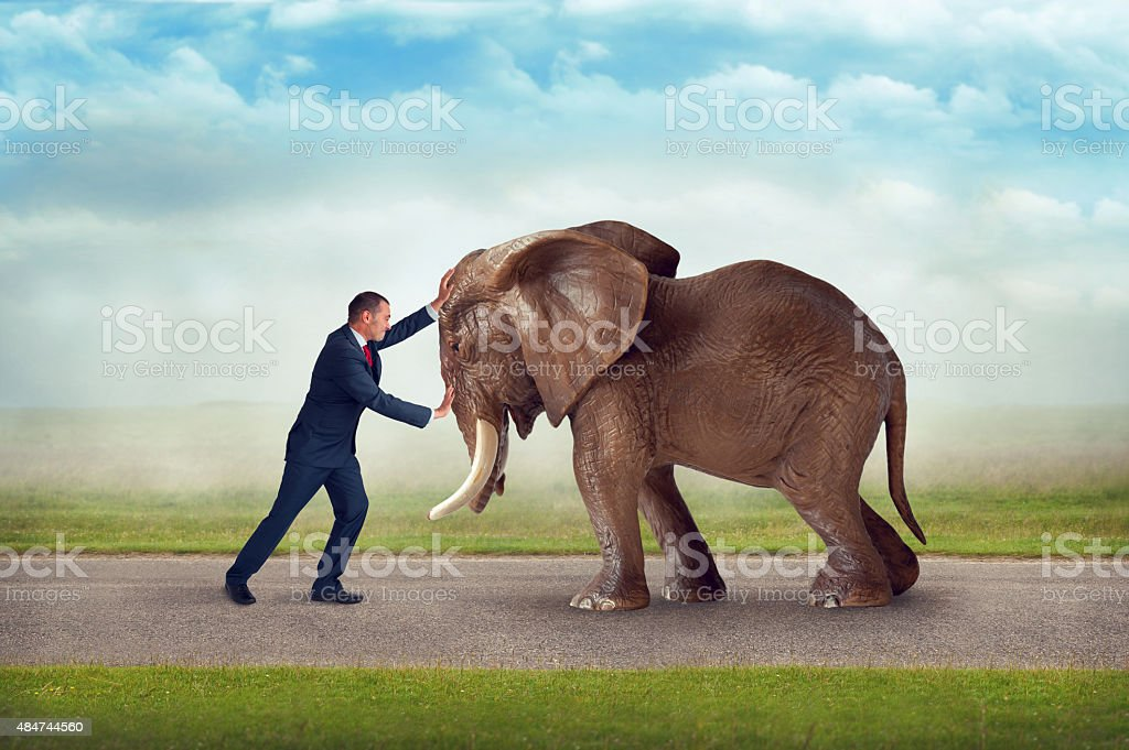 business challenge elephant obstacle stock photo
