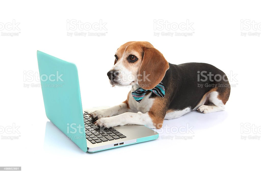 business concept pet dog using laptop computer stock photo