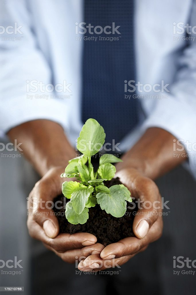 Business development - Hands holding seedling royalty-free stock photo