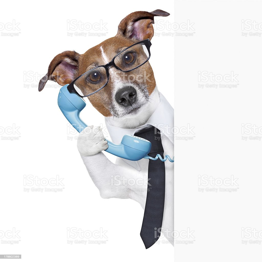 Business dog answering the phone royalty-free stock photo