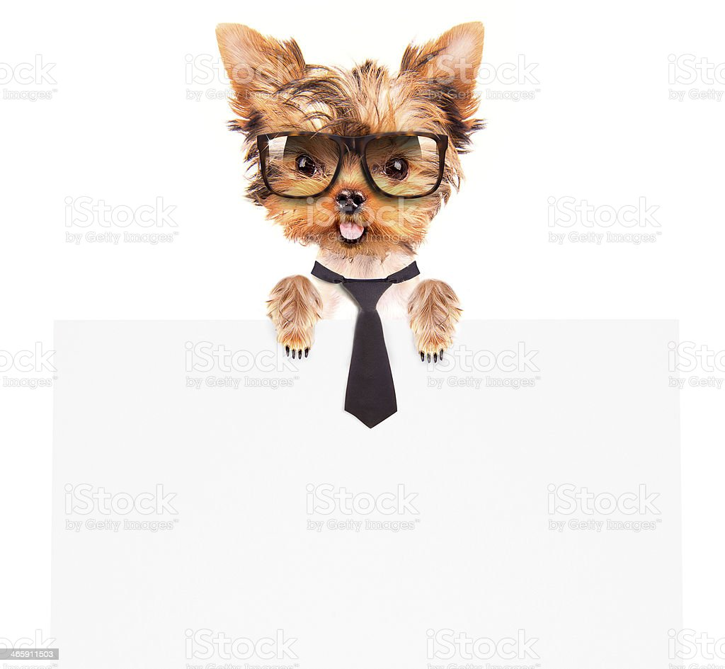business dog holding banner stock photo