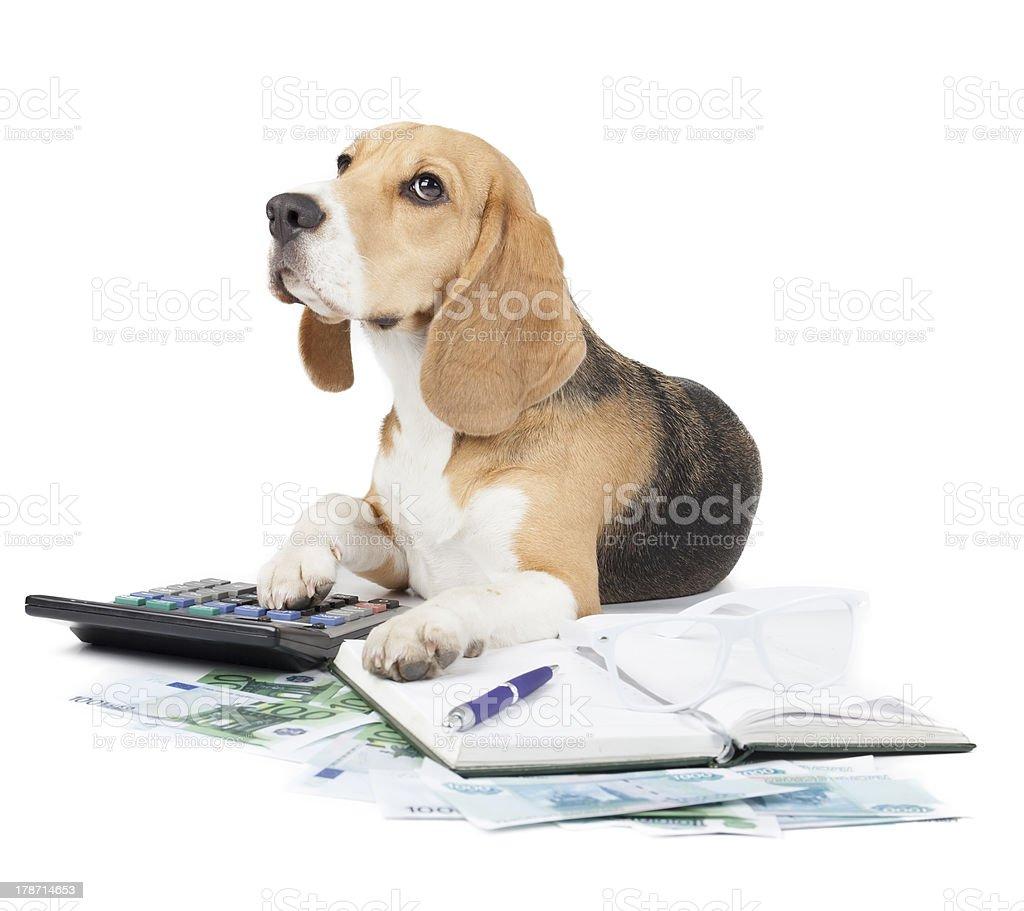 business dog typewriter stock photo