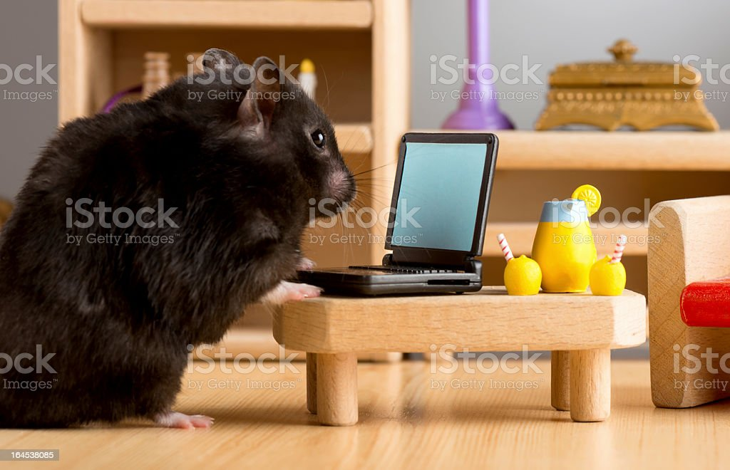 Business hamster royalty-free stock photo