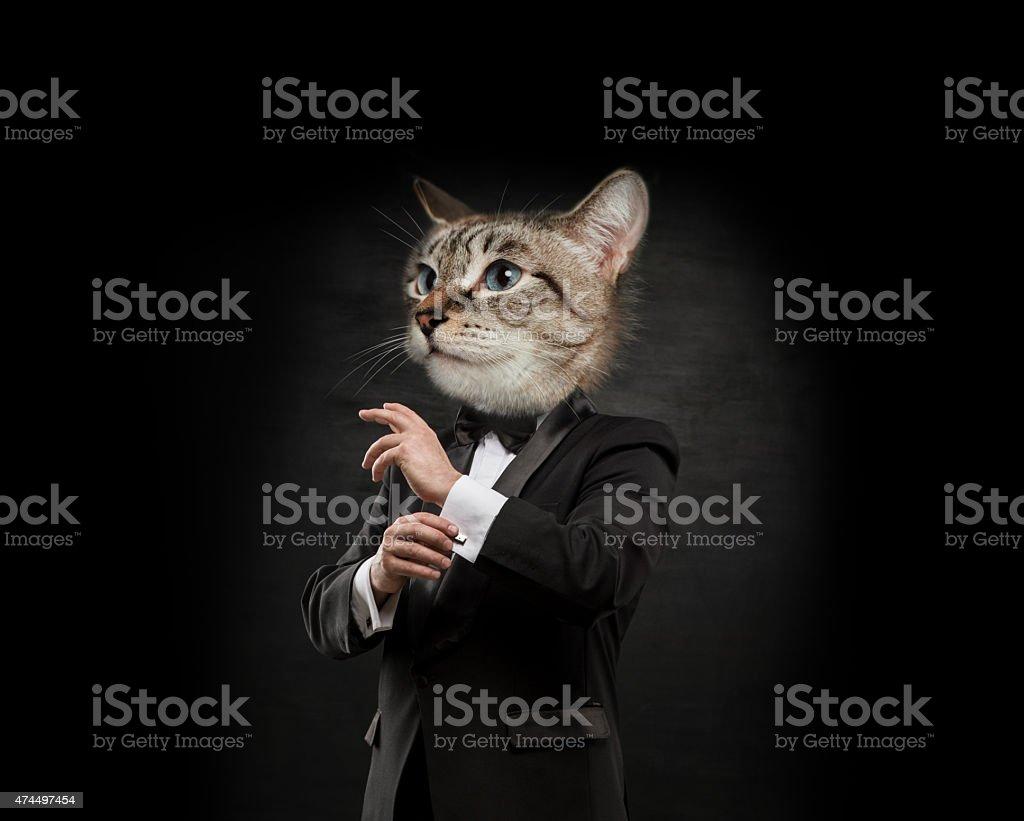 Business man cat head stock photo