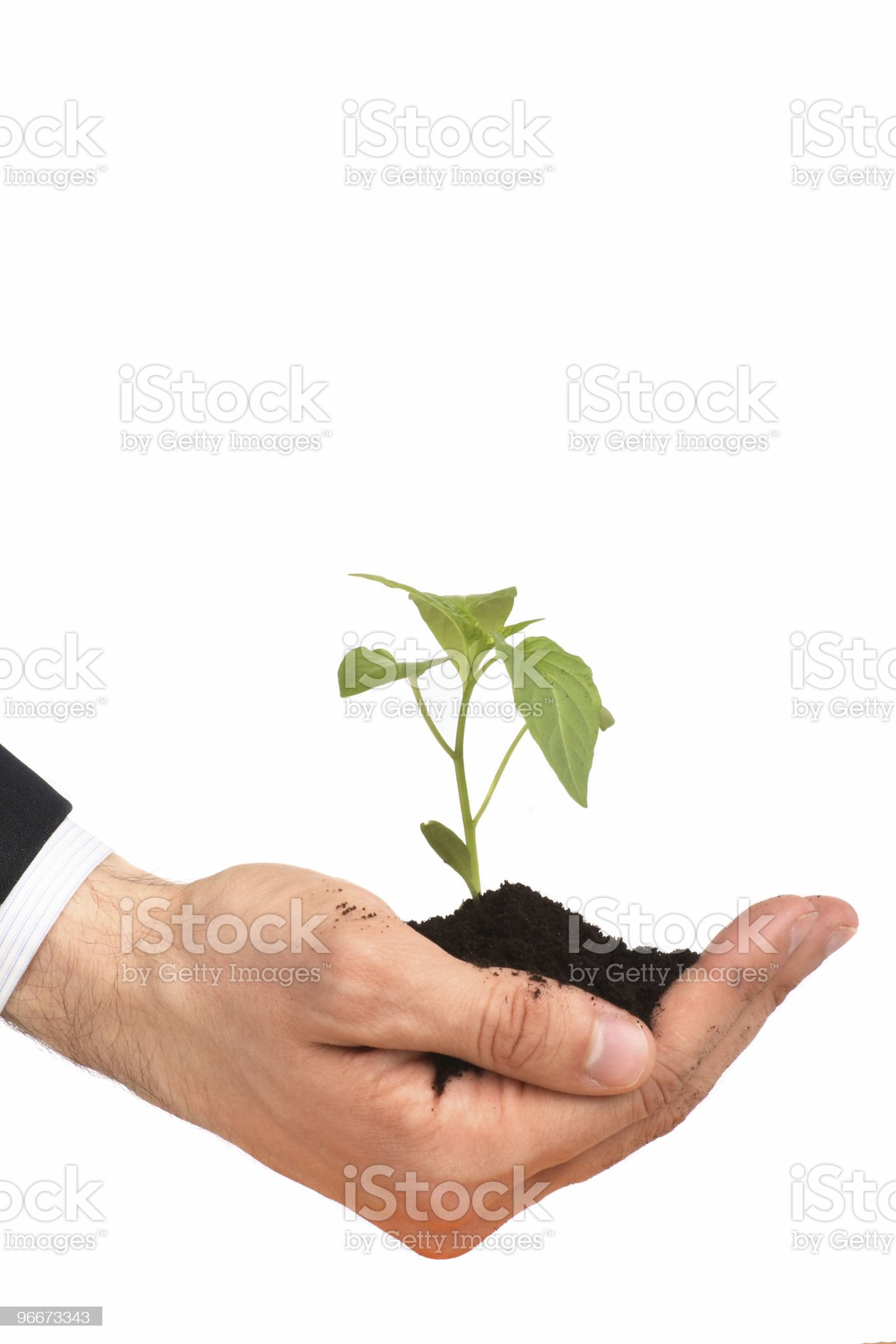 business men a plant royalty-free stock photo
