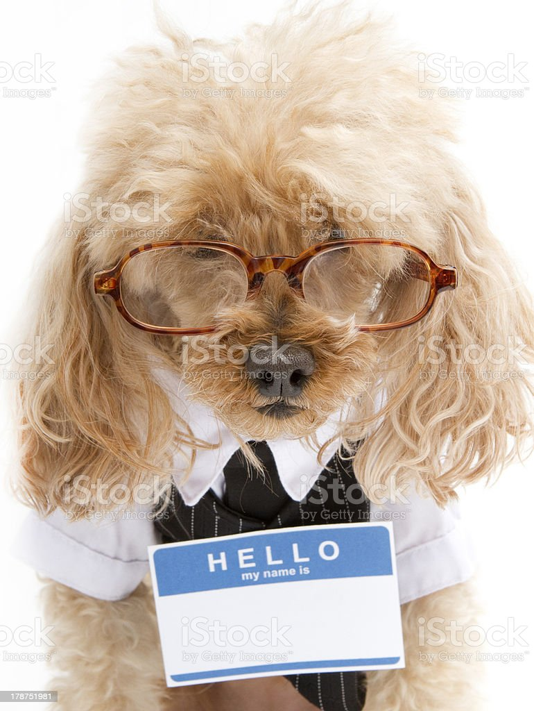 Business Pooch In Blank Name Tag stock photo