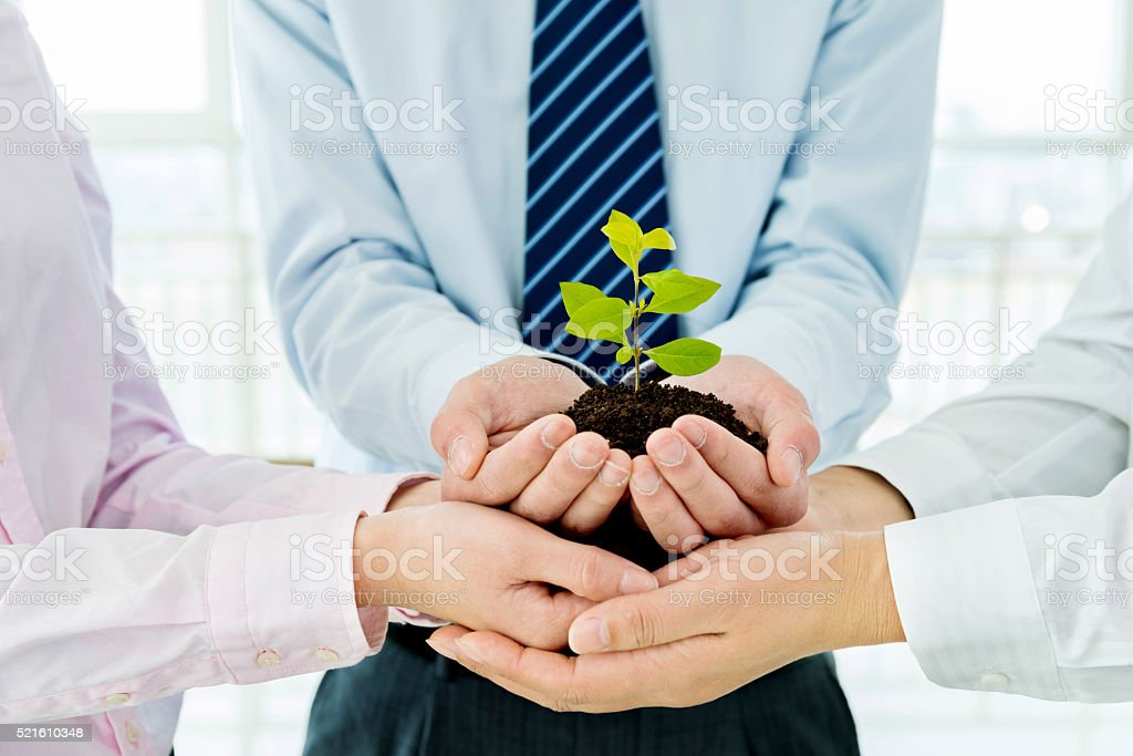 Business team holding plant together stock photo