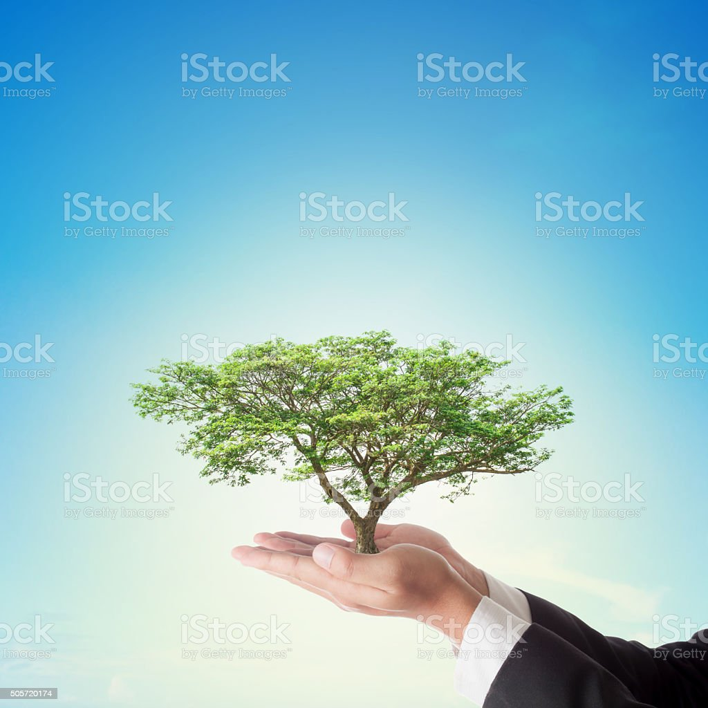 Businessman hand holding big tree with blue sky , stock photo