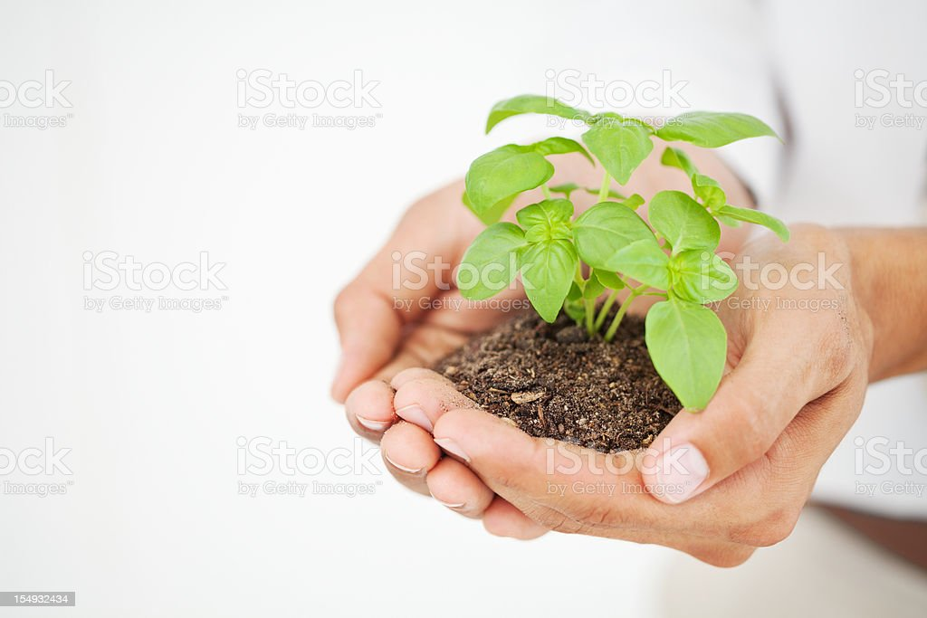 Businessman Holding an Uprooted Plant royalty-free stock photo