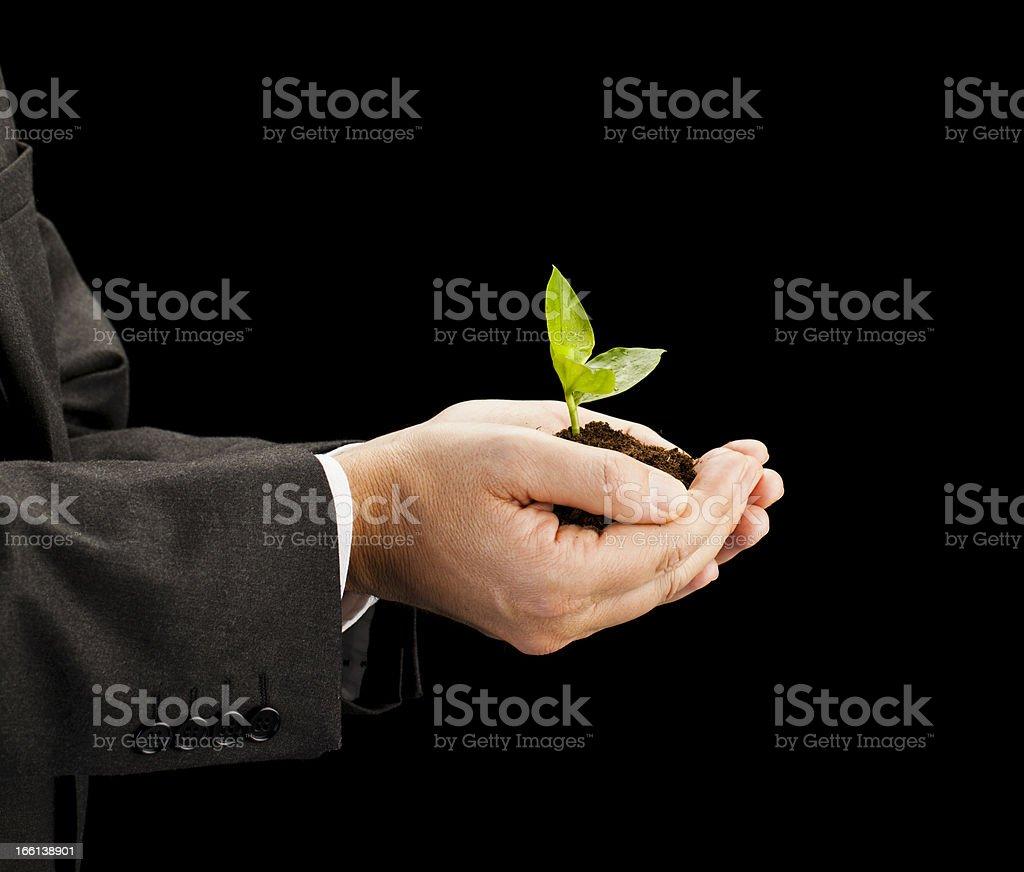 Businessman holding seedling royalty-free stock photo